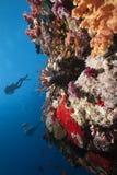 океан lionfish водолазов стоковое изображение rf