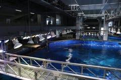 ОКИНАВА - 9-ОЕ ОКТЯБРЯ: Аквариум в Окинаве, Япония Окинавы Churaumi 9-ого октября 2016 Стоковое Изображение