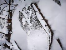 Окна снега стоковая фотография rf