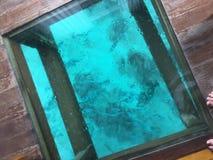Окно бунгала воды стоковые фотографии rf