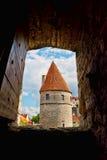 окно взгляда башни tallinn стоковая фотография