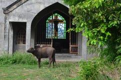 Окно в католической церкви в Филиппинах стоковое фото rf