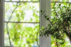 Окно загородного дома в лете Стоковое фото RF