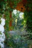 Окно зеленых цветов Стоковые Изображения