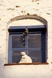 окно игрушки городка котов старое Стоковая Фотография