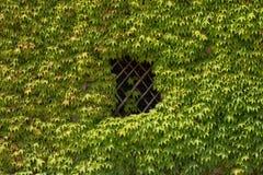 Окно листьев Стоковая Фотография