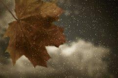 окно клена листьев Стоковые Изображения