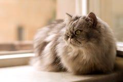 окно кота Стоковые Изображения