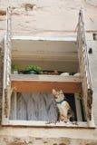 окно кота Стоковая Фотография