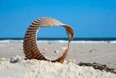 Окно к океану, Мексиканский залив, Флорида, США стоковые фото