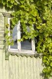 окно листьев виноградины заволакивания стоковое изображение rf