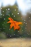 окно листьев падения Стоковая Фотография