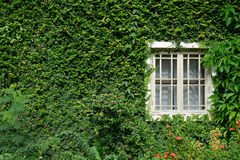 Окно на листьях Стоковое фото RF