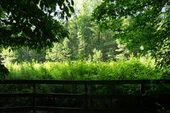 Окно на растительность Стоковые Фото