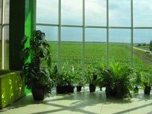 Окно офиса и поля Стоковое Изображение RF