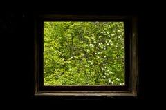 окно природы s Стоковые Фотографии RF