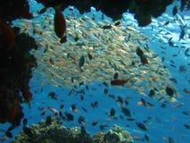 окно рифа Стоковые Фото