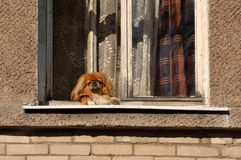 окно собаки Стоковое Изображение RF