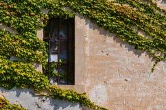 Окно с адвокатскими сословиями металла и листьями виноградины Стоковое Изображение RF