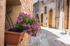 Окно с вазой цветка в переулке стоковое изображение
