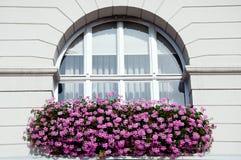 Окно с розовым гераниумом Стоковое Изображение RF