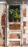 Окно с цветками Стоковые Изображения RF