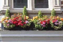 Окно украшенное с цветками, декоративная растительность, типичный взгляд улицы Лондона, Лондон, Великобритания Стоковое Изображение RF
