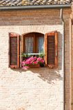 окно цветка стоковая фотография