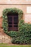 окно шпагата плюща Стоковое Фото