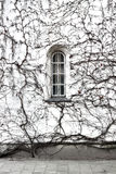 окно bush стоковое фото