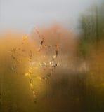 окно misted листьями стоковое изображение