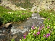 около потока silverton Стоковые Изображения