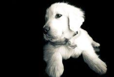 около щенка отдыхая вы Стоковое Изображение