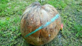 Около кокоса Стоковые Изображения