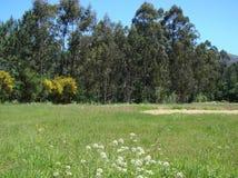 Окраины городка Redondale Испания Естественные взгляды испанского леса и различных цветков весны стоковое фото rf