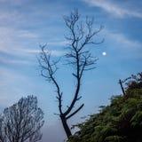 Окрестности вулкана Ijen в раннем утре Силуэт дерева на наклоне горы и дурачок лунатируют стоковое фото rf