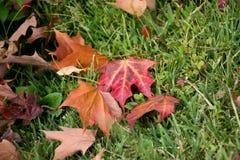 Окружать листьев Стоковая Фотография RF