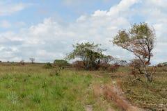 Окружать реку Guayabero Колумбия стоковые изображения