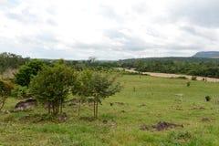 Окружать реку Guayabero Колумбия стоковое изображение rf