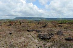 Окружать реку Guayabero стоковые фотографии rf