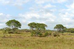 Окружать реку Guayabero стоковое фото rf