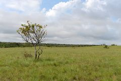 Окружать реку Guayabero стоковое изображение