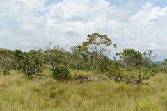 Окружать реку Guayabero стоковая фотография rf