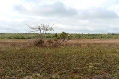Окружать реку Guayabero стоковые изображения rf