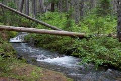 Окружающая среда зеленого цвета Канады глуши потока леса стоковая фотография rf