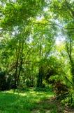 Окружающая среда зеленых дерева и травы Стоковое фото RF