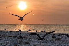 Окружающий заход солнца во Флориде стоковые фотографии rf