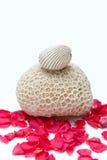 окруженная раковина лепестка коралла ископаемая Стоковые Фото
