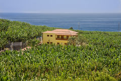 окруженные плантации palma la дома банана Стоковое Изображение RF