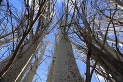 Окруженный деревьями Стоковое Изображение
